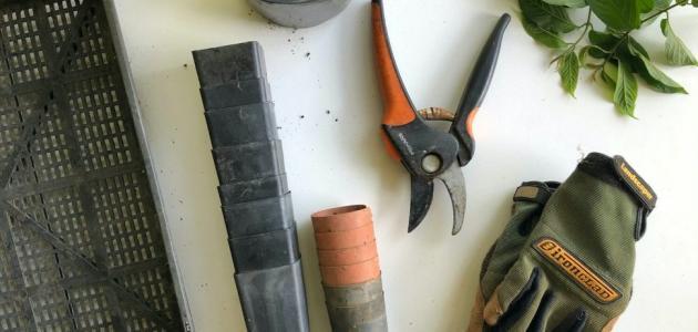 هذه الأدوات هي ما تحتاجينه للبدء بزراعة حديقتك المنزلية