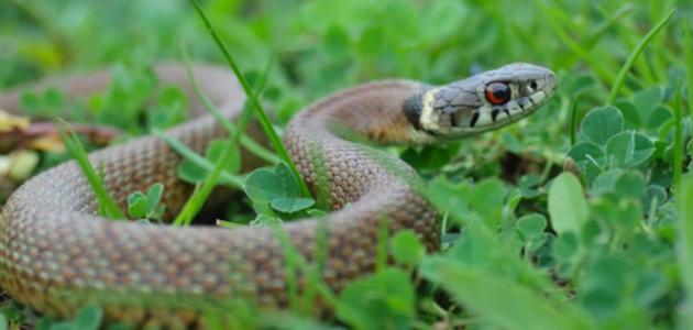 التخلص من الثعابين في المنزل والحديقة