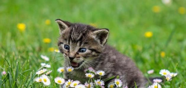 49ebd62da أفضل أسماء القطط - حياتكِ