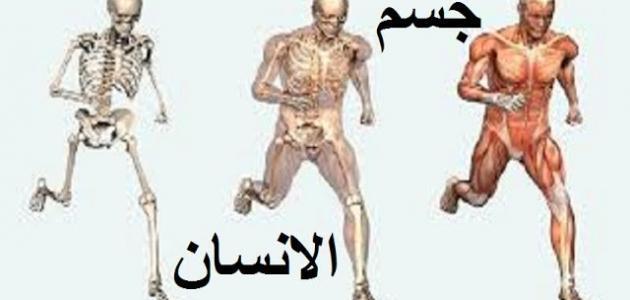 مم يتكون جسم الإنسان