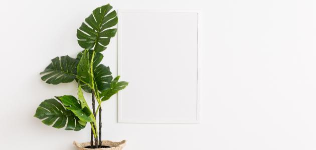 أفضل نباتات الزينة المنزلية حياتك