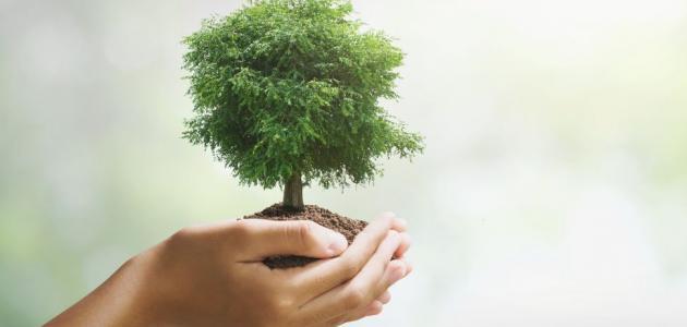 المحافظة على الشجرة