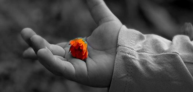 الفرق بين العفو والتسامح
