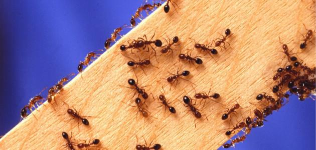 طرق مكافحة الحشرات