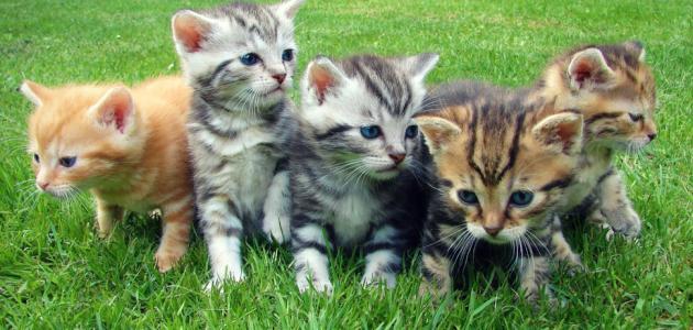 فطريات القطط هل تعدي الانسان