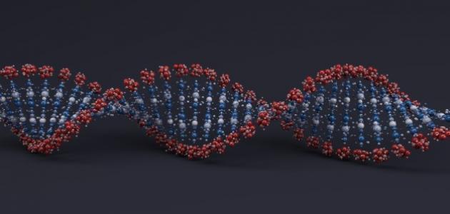 كم عدد الكروموسومات في الانسان