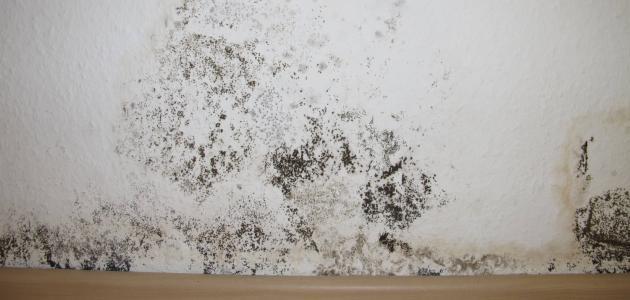 اضرار الرطوبة في المنزل