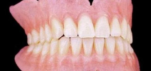 عدد اسنان البالغ