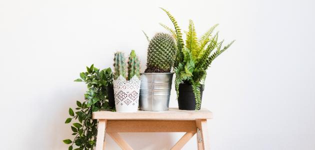 افضل نبات منزلي