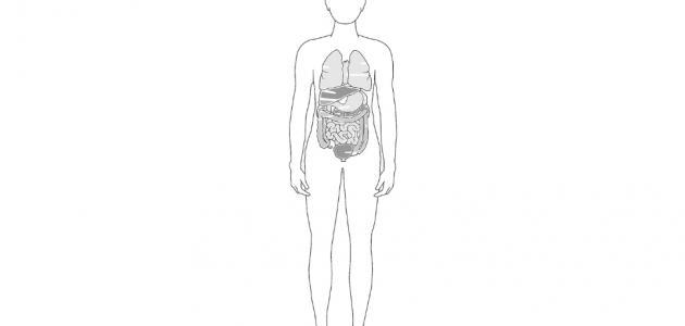 عدد اعضاء جسم الانسان