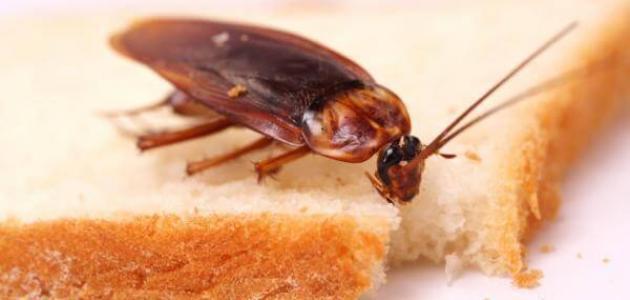 افضل طريقة للتخلص من الصراصير في المنزل
