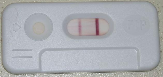 طريقة الملح لمعرفة الحمل قبل موعد الدورة حياتك