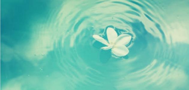 فوائد الماء الورد