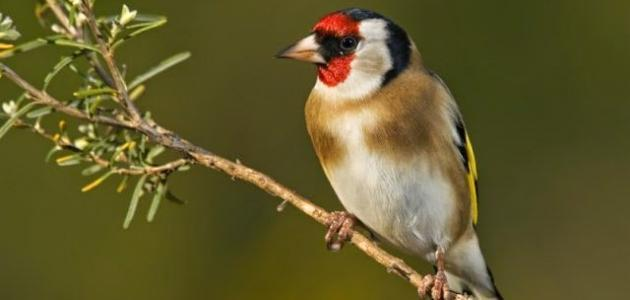 أسماء بعض الطّيور