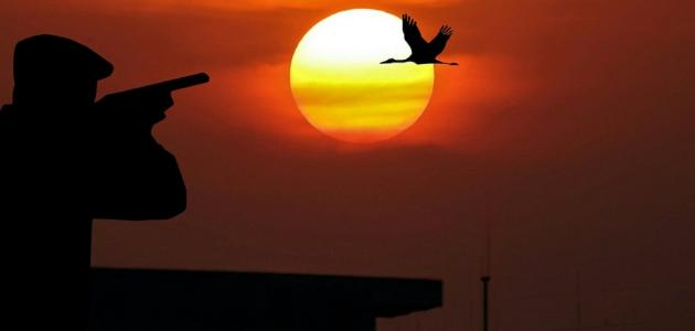 طريقة صيد الطيور
